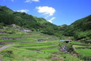 球磨村の棚田