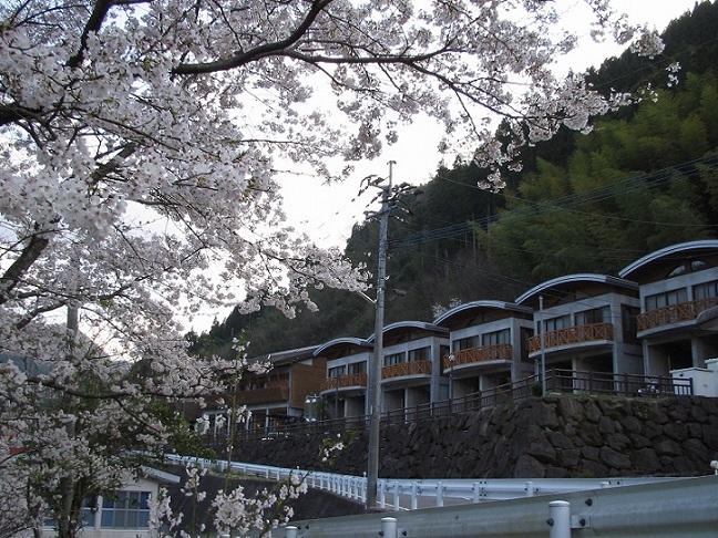 一勝地温泉かわせみの桜並木